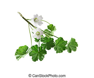 Common Mallow Flower - Common Mallow wildflower plant ...