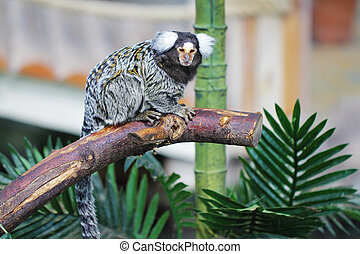 Common marmoset sitting on tree branch animal photo