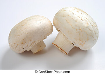 Common mushrooms