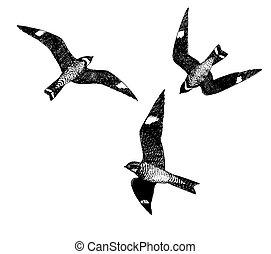 Common Nighthawks - Common Nighthawk Chordeiles minor Pen-...