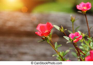 Common Purslane or Verdolaga flower.