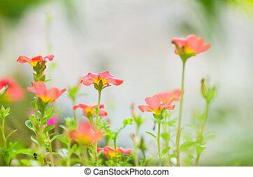 Common Purslane or Verdolaga or Pigweed or Little Hogweed or Pus