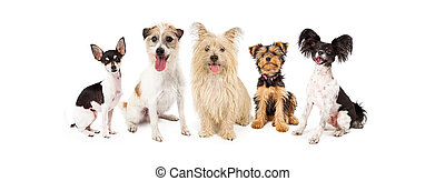 Common Small Breed Dogs - A row of six small breed dogs...