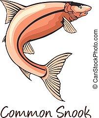 Common Snook, Color Illustration