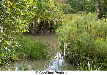 Spike rush, Cyperus papyrus, pickerelweed, and other aquatic plants growing in water