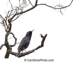 starling on branch of tree