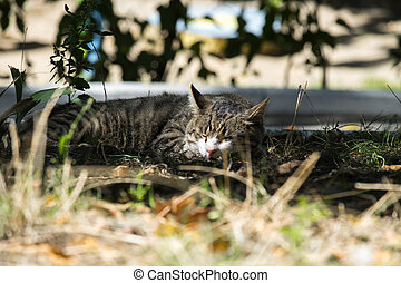 Common tabby cat dozing in the sun