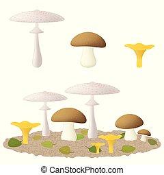 Common types of edible mushrooms