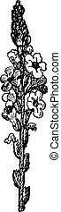 Common Verbena or Verbena officinalis, showing flowers, vintage engraved illustration. Dictionary of Words and Things - Larive and Fleury - 1895