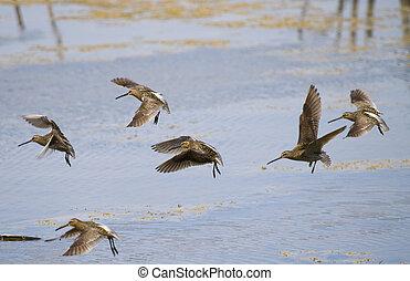 Images et photos de b cassine 1 486 images et for Oiseau commun