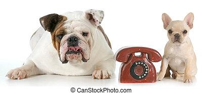 communication, chien