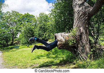 como, ser, árbol grande, joven, park., miradas, comido, él, hombre