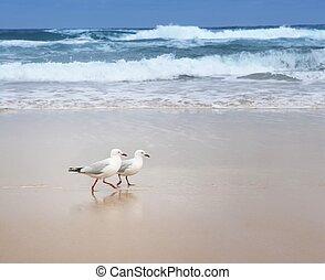 Two seagulls strolling on an empty beach