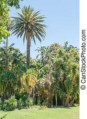 Company Garden, Cape Town