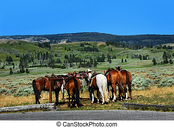 Company Tour - Group of horses await their passengers at the...