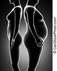comparación, mujer, delgado, grasa