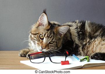 compas, copyspace, bois, aiguisoir, sélectif, lunettes, nègre, mensonges, foyer, cahier, regarde, table, portrait, chat, ouvert, maine, crayon