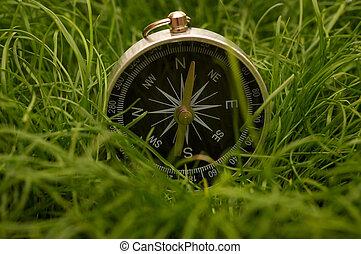 compas, herbe, vert