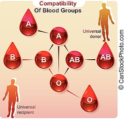 Compatibility of blood groups
