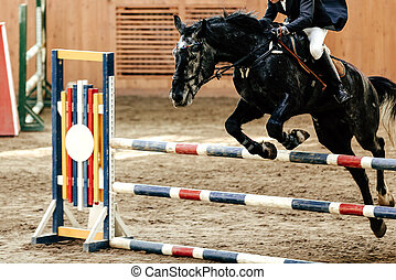 competition for equestrian sport
