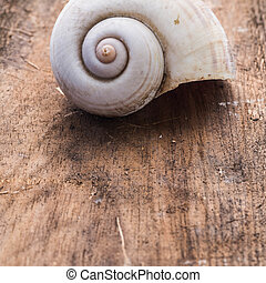 Complete dirty Nautilus Shell on wooden background