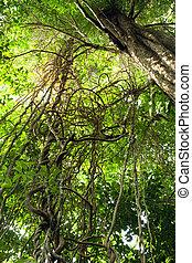 complexité, jungle, vignes