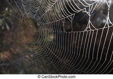 compliqué, toile, araignés