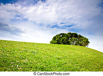 meadow, tree and clouds