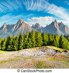 composite image of High Tatra mountains. spruce forest in...