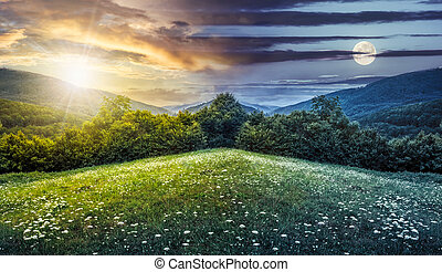 composite landscape with forest in mountains - trees on...