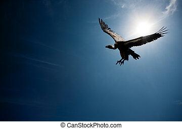 composite), soleil, voler, vautour, (digital, devant