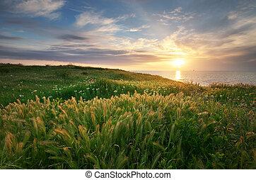 composition., coucher soleil, paysage