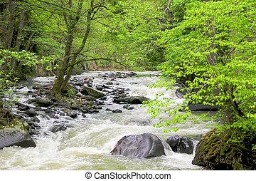 composition., fjäll, natur, djup, forest., flod