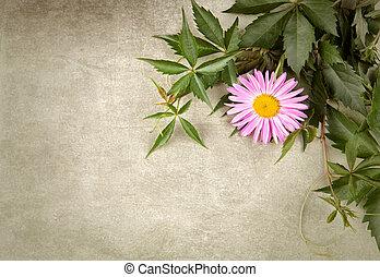 composition, fleur