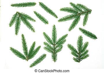 composition., jodła, gałąź, gałęzie, płaski, stożki, górny, drzewo, sosna, boże narodzenie, tło., space., prospekt, biały, kopia, pieśń