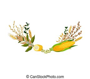 Composition of ears of corn and different ears of corn. Vector illustration.