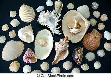 Composition of exotic sea shells on black background close up view
