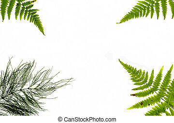 Composition of fern leaves on a white background