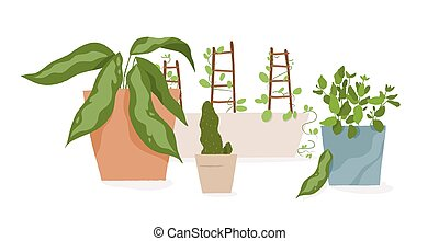 Composition of houseplants in pots vector flat illustration...
