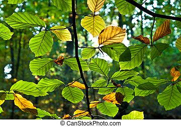 oak leaves in harmony