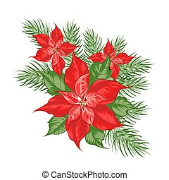 Composition of red poinsettia flower isolated over white background.