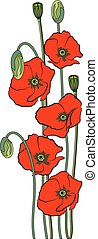 Composition of red poppy flowers isolated on a white background.