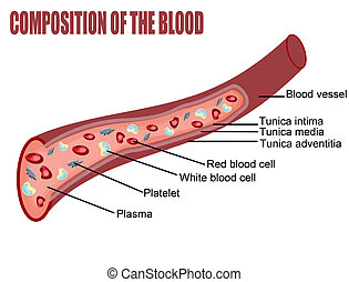 Composition of the blood (blood vessel cut section), vector...