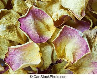 rosebuds - composition of three dry up rosebuds;