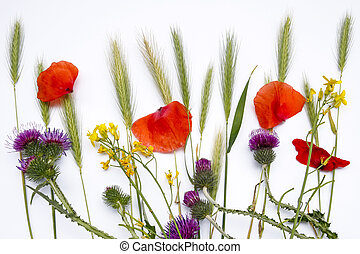 composition of wild field flowers on white background