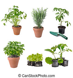 composition on white background with group of aromatic plant and vegetable seedlings -