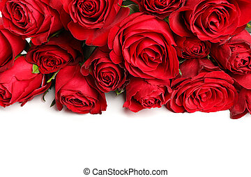 Composition with bouquet of red roses isolated on white background, closeup