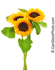 Composition with sunflowers isolated on white background