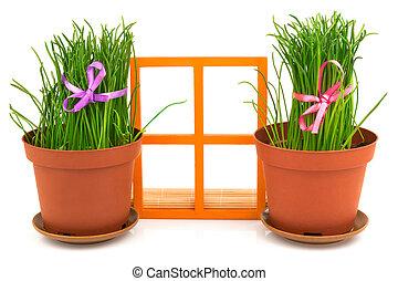 composizione, con, uno, finestra