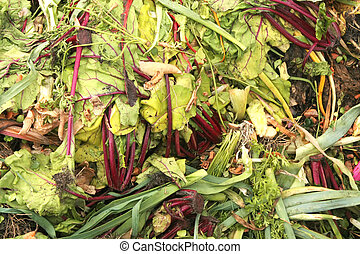 Compost Heap Made of Unused Vegetables in Recycle